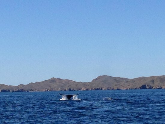 Hotel Villas Mar y Arena Ecotours : You can see whales in the ocean