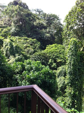 Alila Ubud: jungle, heaps of it.
