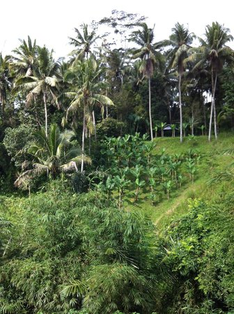 Alila Ubud: view from restaurant