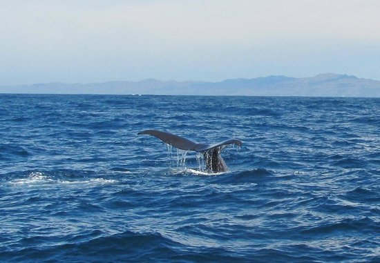The Point Bed and Breakfast: Whale Tail in the Bay at Kaikoura