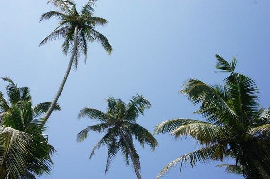 Surfing Villa: quand on regarde le ciel de la piscine