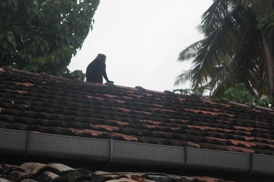 Surfing Villa : le toit des chambres