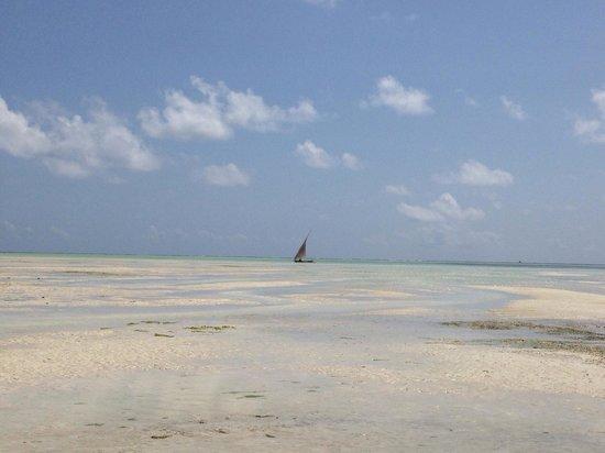 Hakuna Majiwe Beach Lodge : Bassa marea