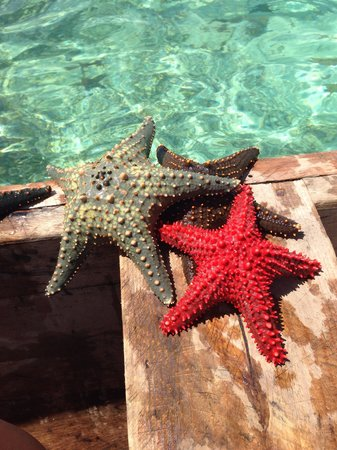 Hakuna Majiwe Beach Lodge : Stelle marine