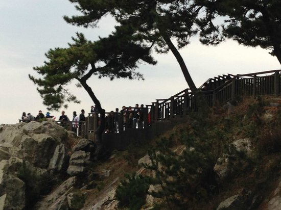 Dongbaekseom Island: walking track