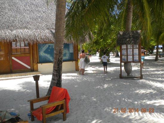 Alimatha Aquatic Resort: TGI Diving