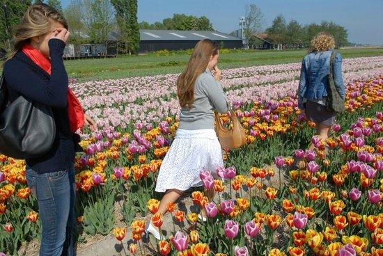Toms Travel Tours : Private Tulip Photo Excursion