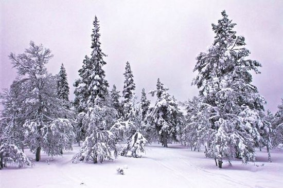 Santa's Hotel Tunturi: Scenery on private snowmobile trip