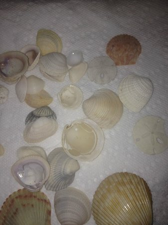 Shell Island: Some of our treasures