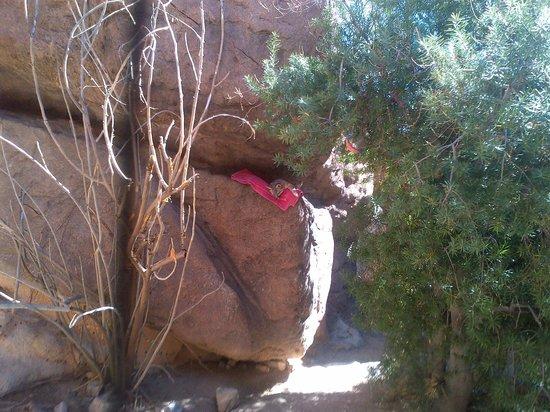 Arizona-Sonora Desert Museum: cooling down