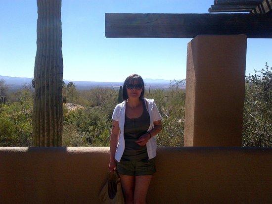 Arizona-Sonora Desert Museum: outside the tearoom