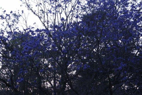 The Regent Hill Side Villa & Resort: purple blossom