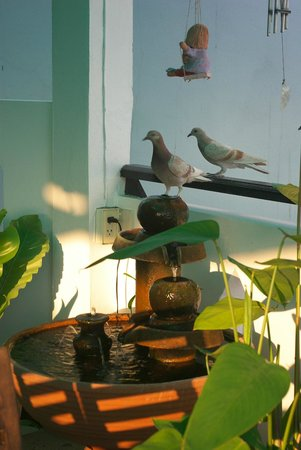 Top Garden Boutique Guesthouse: Top Garden