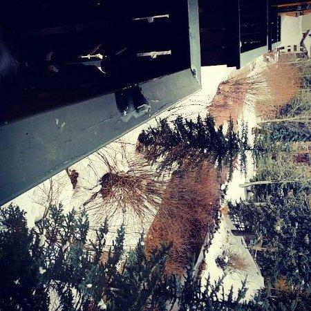 هوتل غاستهوف جرامشامر: River Front Balcony