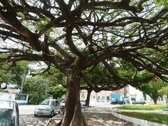 Bahia Metisse - Day Tours: mais quel est le nom de ce bel arbre ?