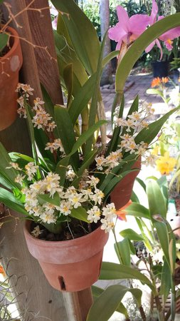 Naples Botanical Garden: Orchids