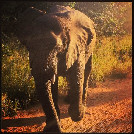 Kapama Buffalo Camp : Elephant on Game Drive