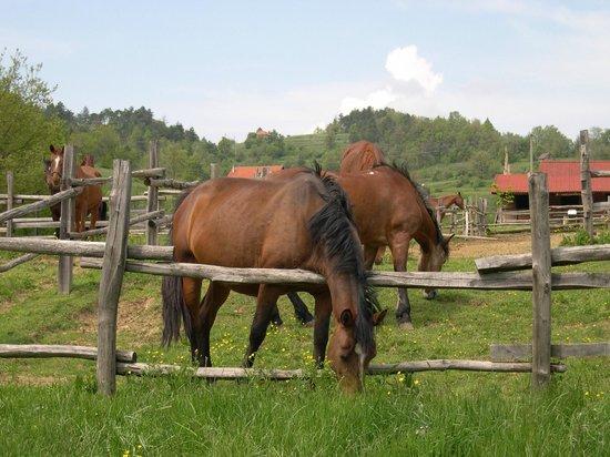 Sassello, Italien: cavalli al pascolo