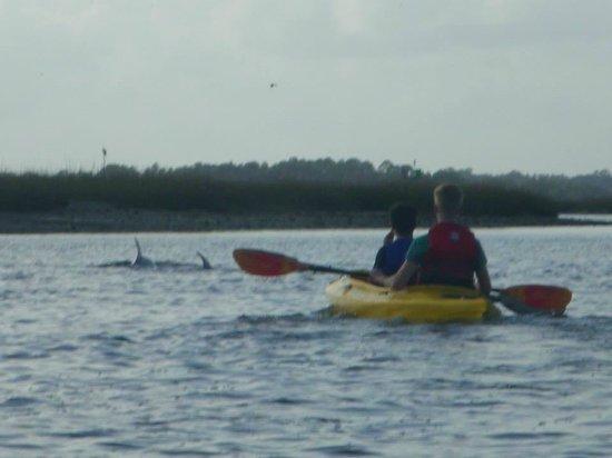 Amelia Island Kayak Excursions: Look What We Saw