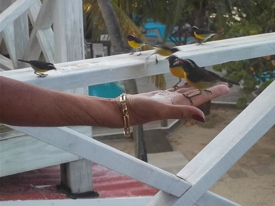 Coconut Beach Club : Birds on the balcony