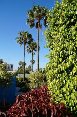 Tropical La Zona: Gartenalage