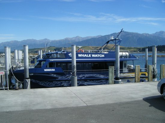 Whale Watch : Fast Cat ready to go
