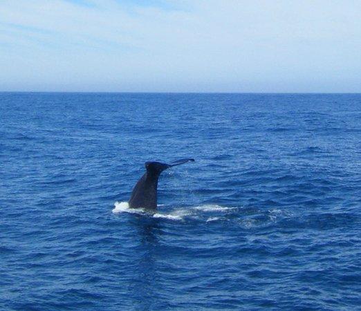 Whale Watch : Dive! Dive! Dive!