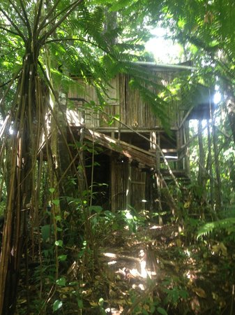 Rosalie Forest Eco Lodge: Chataniere Treehouse