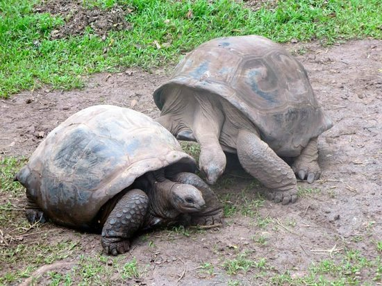 La Residence Hotel: We took a trip down to the south and met some giant tortoises, getting romantic