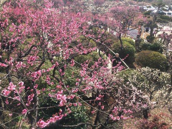 Ikegami Baien: 斜面に咲く梅
