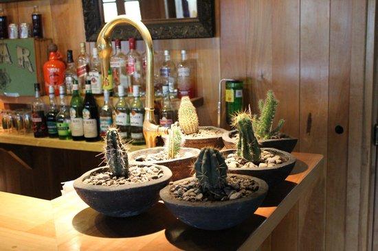 Sieteflores Hosteria de Montana: Cactus
