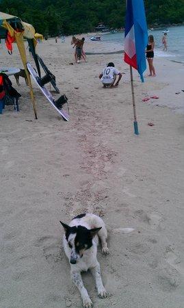 Central Cottage Resort: Honden op het strand