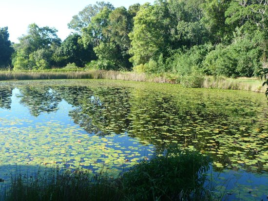 Lily Pond Country Lodge : Lily pond