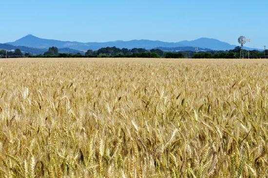 Farms abundant around Junction City Oregon