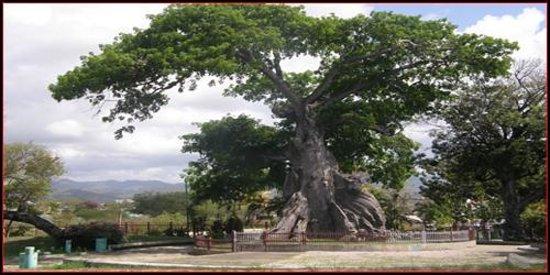 Parque de la Ceiba: Parque la Ceiba