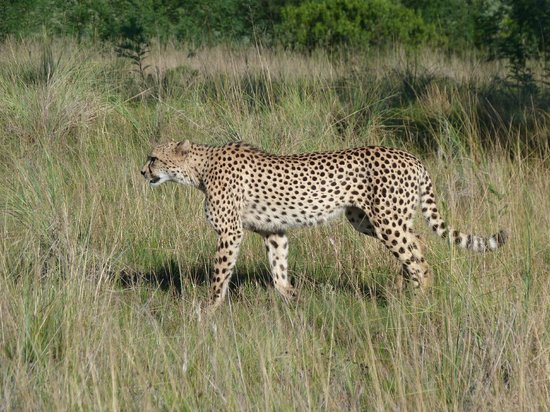 Lalibela Game Reserve : Cheater