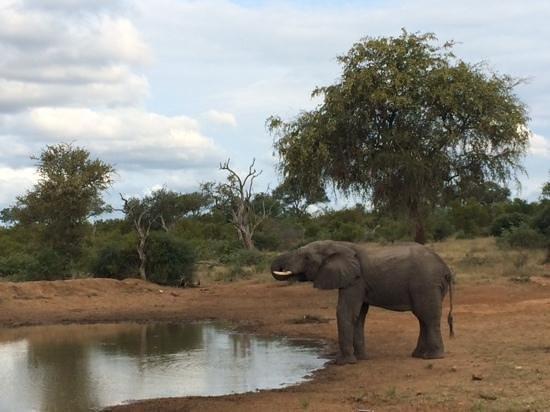 Pondoro Game Lodge: Elefantenbulle
