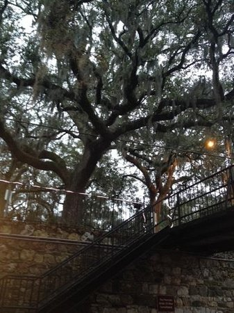 Olde Harbour Inn - River Street Suites : Moss hanging from trees at entrance to hotel