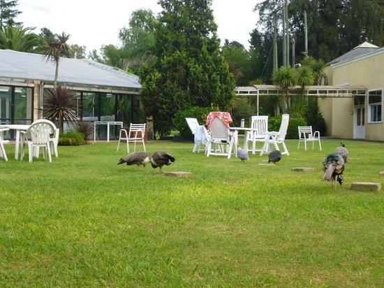 Paradiso- Resort & Eventos : PARQUE