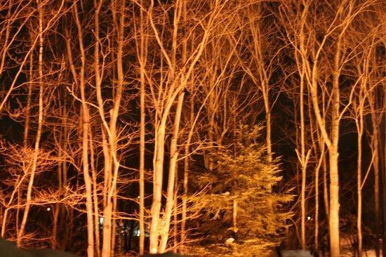 Hôtel-Musée Premières Nations : Boisé éclairé, de nuit, en hiver