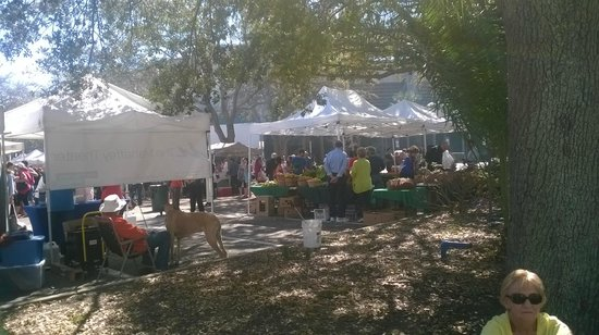 Hilton St Petersburg Bayfront: Saturday Farmers market, a short block away from the Hotel.