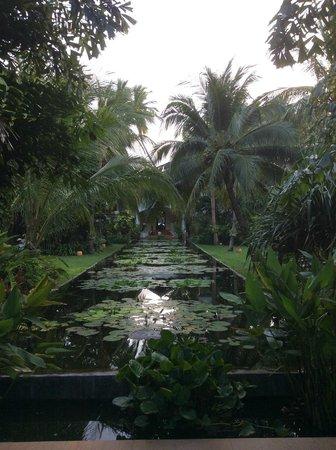 Anantara Bophut Koh Samui Resort : Lily pond garden