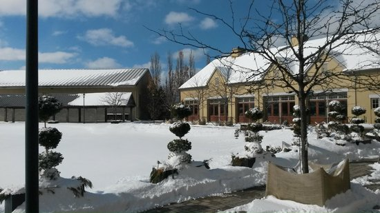 Peller Estates Winery Restaurant : Vista do Wine Garden