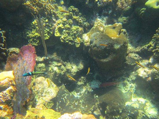 Roatan Eco Tour. Snorkeling Tours: Roatan Blue Channel