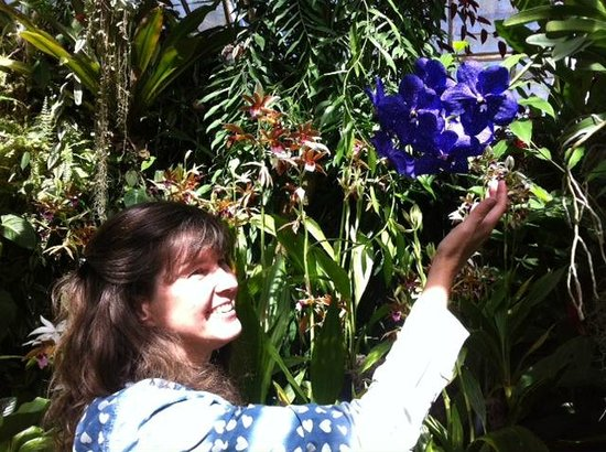 Marie Selby Botanical Gardens: blooming everywhere