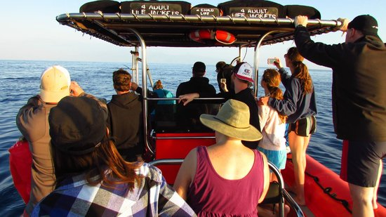 Ocean Riders Adventure Tours : Our boat