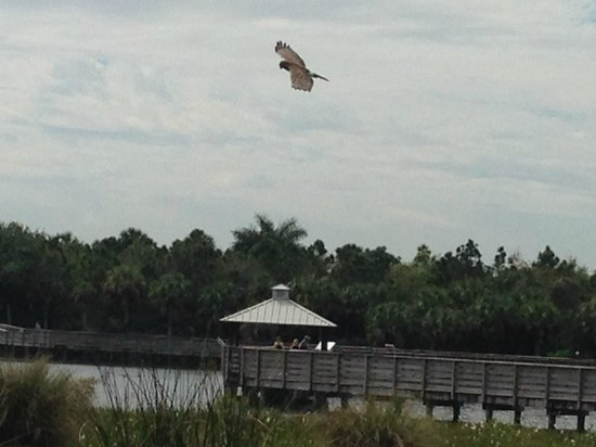 Green Cay Nature Center and Wetlands: Hawk