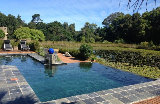 Lily Pond Country Lodge : The infinity pool