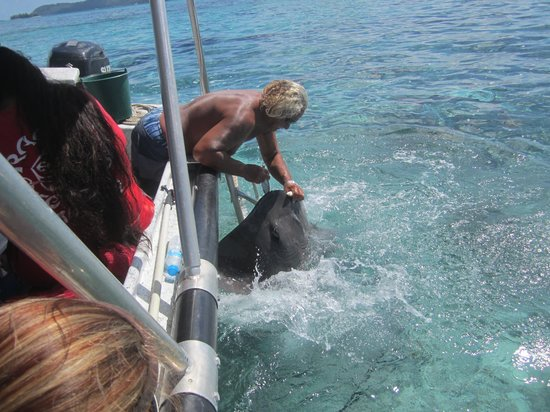 The St. Regis Bora Bora Resort: Feeding the rays