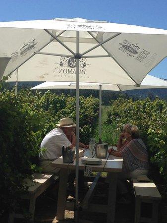 Bramon Wine Estate : Lunch amongst the vines